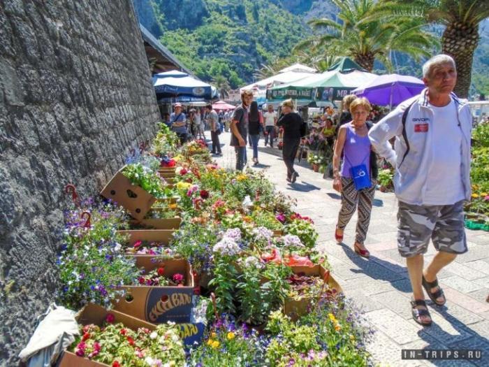 Открытая часть которского рынка, продают цветы и рассаду