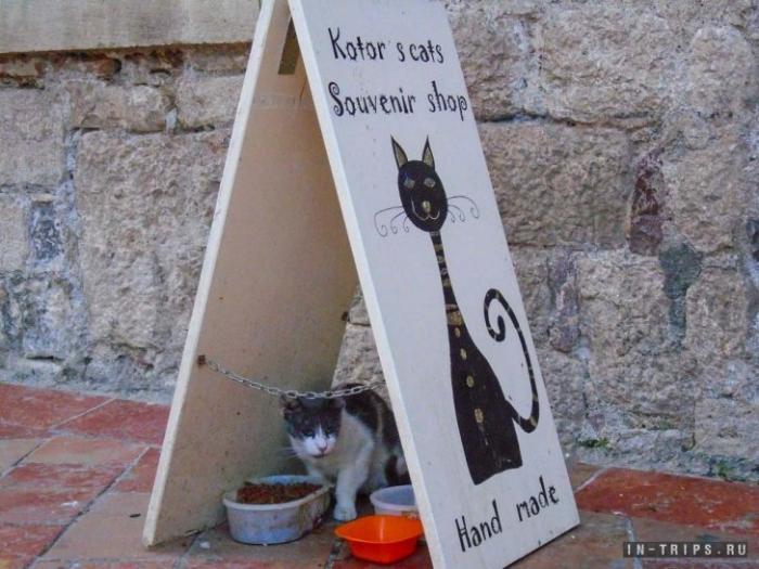 Продавцы сувениров подкармливают бездомных кошек