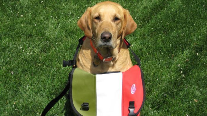 Собака с сумкой