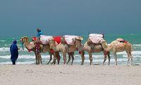 Зарзис - самый южный курорт Туниса