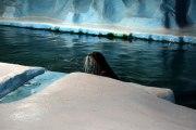 Аквариум с арктическими морскими животными