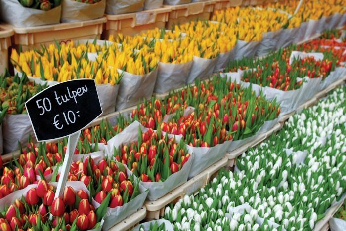 Тюльпаны в Амстердаме.jpg