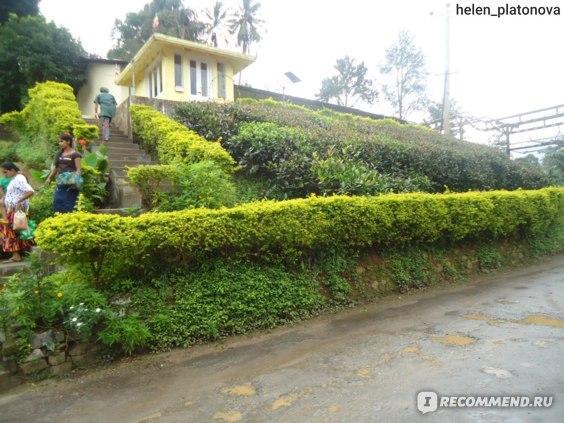 Чайная фабрика в Канди