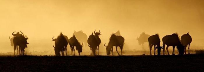 Дикие обитатели ЮАР.jpg