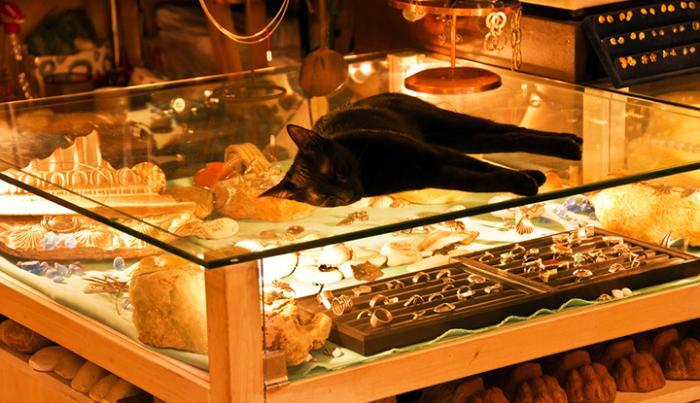 Кошка в ювелирном салоне.
