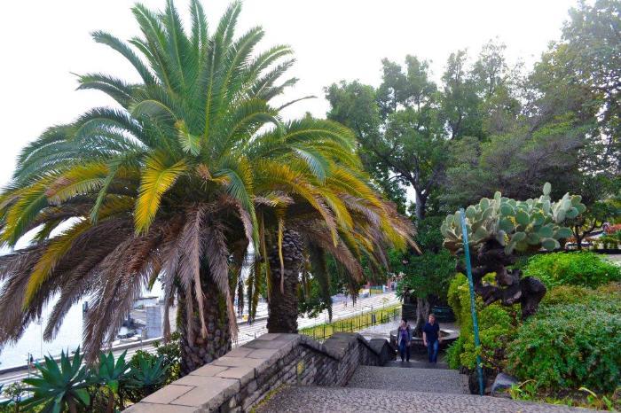Фуншал Мадейра 11