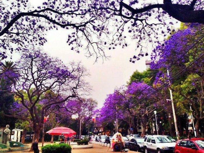 Colonia Condesa - самый модный район города