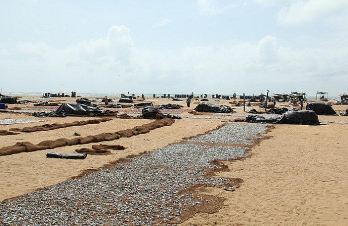 Шоппинг в Негомбо - Рыбный рынок