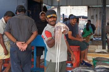 Рыбный рынок в Негомбо, Шри-Ланка