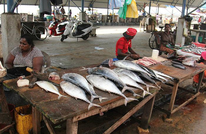 Рыбный рынок (Fish Markets)