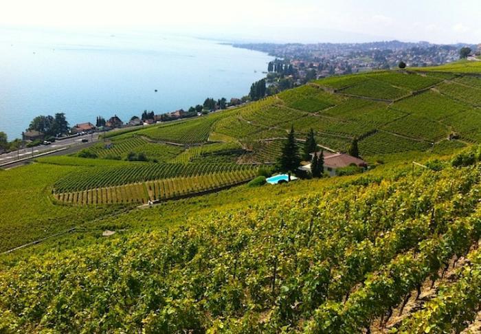 виноградники Лаво, Швейцария