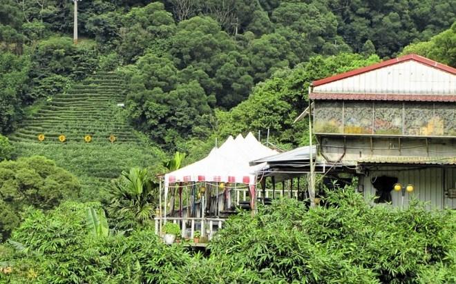 Чайные плантации Maokong Gondola