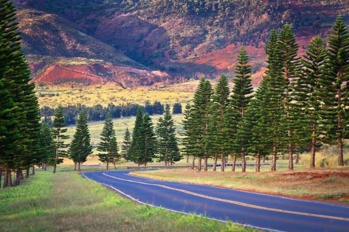 Дорога в горы острова Ланаи Photography.jpg