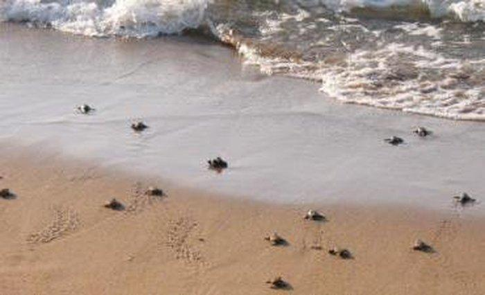 Alagadi Turtle Beach